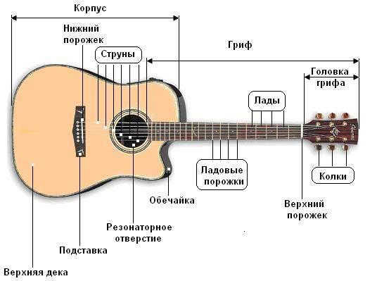 Гитартная анатомия