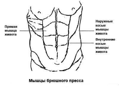 Мышечный комплекс
