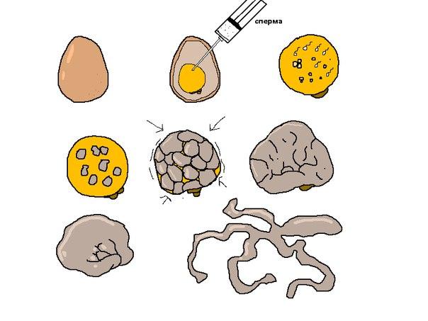 Как вырастить гомункула из яйца?
