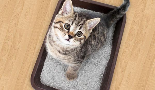 Как эффективно приучить котенка к лотку?