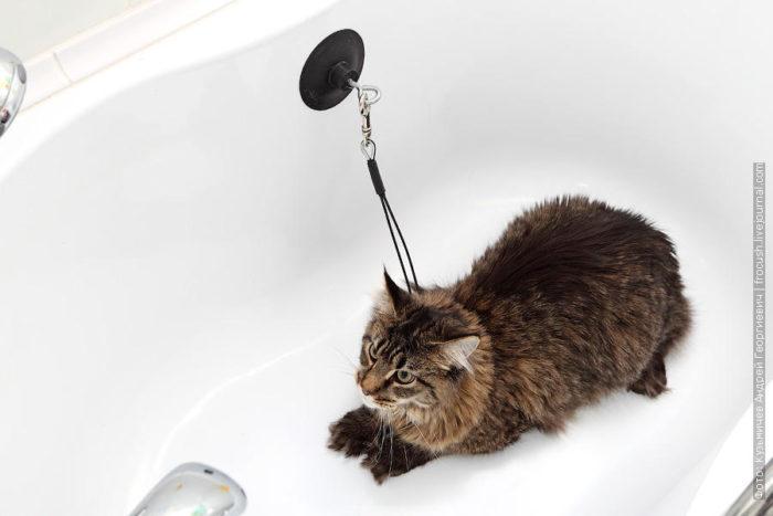 Как помыть кота который боится воды видео и царапается
