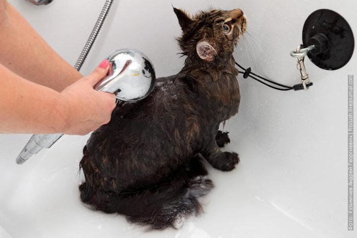 Как помыть кота: инструкция 4