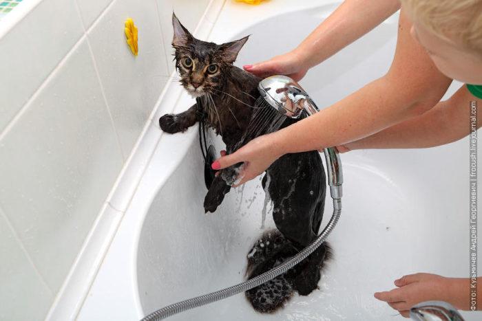 Как помыть кота: инструкция 5