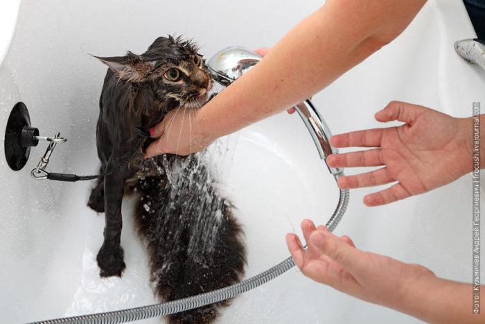 Как помыть кота: инструкция 6
