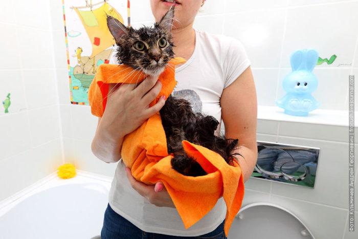 Как помыть кота: инструкция 8