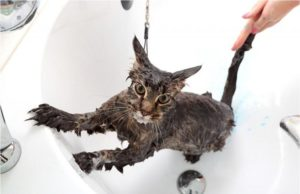Мокрая кошка в ванной