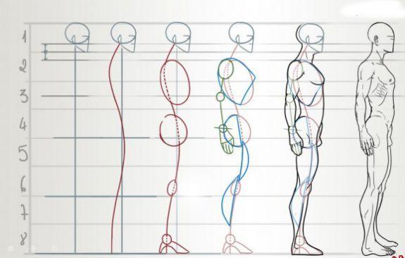 Как поэтапно рисовать фигуру человека в профиль?