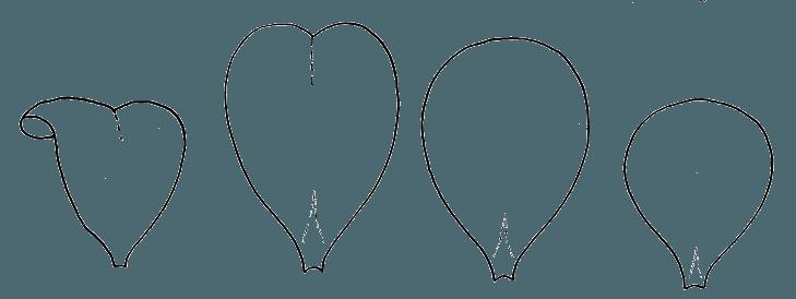 Шаблоны для бумажных цветов: лепестки