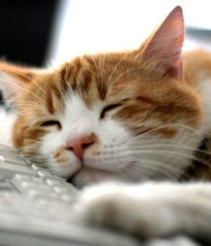 Котик спит на клавиатуре