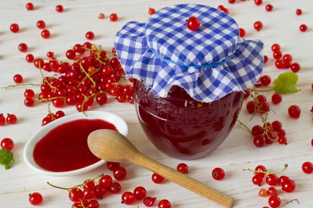 Рецепт приготовления желе из красной смородины на зиму